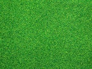 lawn care shepparton