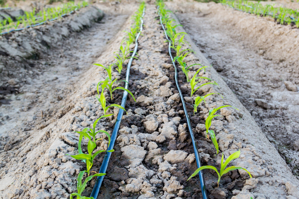5 Types of Irrigation Systems