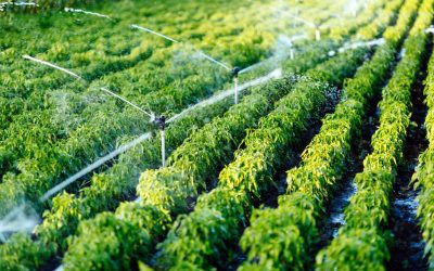 Benefits of Automated Irrigation Systems